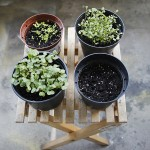 Garden in a Box Pflanzen